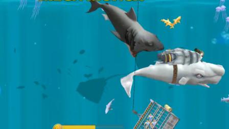 饥饿鲨进化:白鲨海底遇到黑鲨,突然就兴奋起来了厉害!