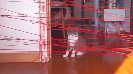 主人用毛线设置障碍,猫咪轻松突破