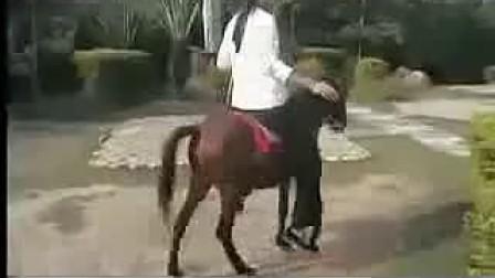 美眉试骑苹果美女小小马图片