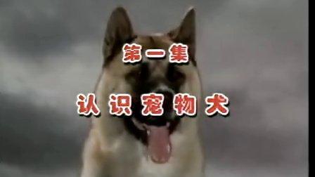 养犬训犬标准教材 高清完整版 4课时1 01-02讲  北京教材大全