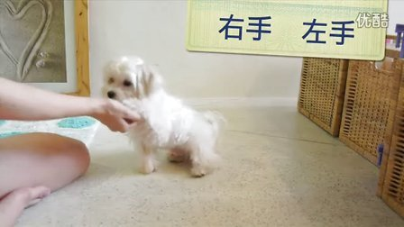 沛莉:教狗狗輕鬆學會七種指令:坐下、 趴下、 等待、跳、握手......