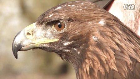 獵奇 第二集 训鹰人和他们的猎鹰