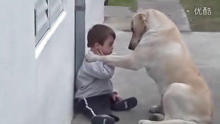 最忠诚好友:乖巧狗狗努力哄它的小伙伴