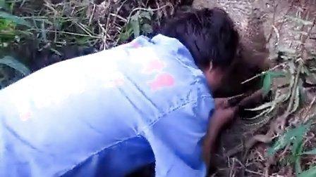 这才是真的野生蜂蜜!看超级牛人如何徒手掏取野蜂窝,胆小勿进!!