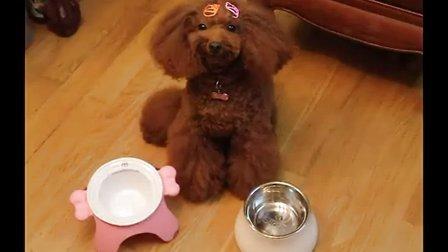 艾丰吃2岁生日蛋糕,骨头形状的大蛋糕!还有名字字母饼干呢!