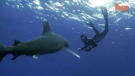 Shark Free Diving: Woman Dives With Oceanic Whitetip Shark