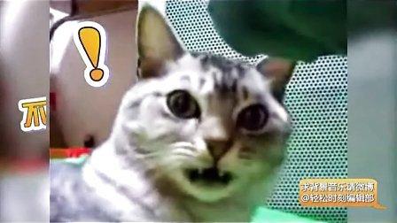 2014年可爱猫咪最新搞笑视频集锦 开心一笑 轻松一刻 爆笑短片合集