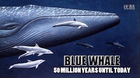 地球历史上10种体形最大的生物