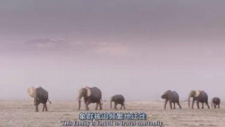 BBC:野性非洲第二集:无际草原