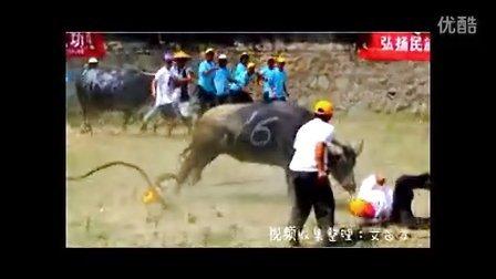 贵州省黔东南斗牛要死人的