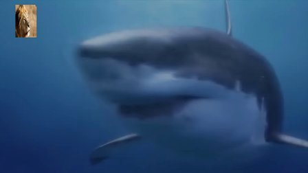 史前掠食动物-巨齿鲨