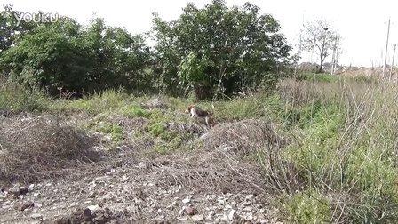 比格打猎10