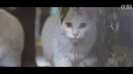 rishiji《cat》(删减)