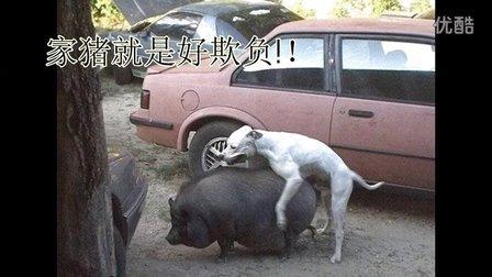 珍藏视频:动物世界被禁播的激情MV 姿势搞笑