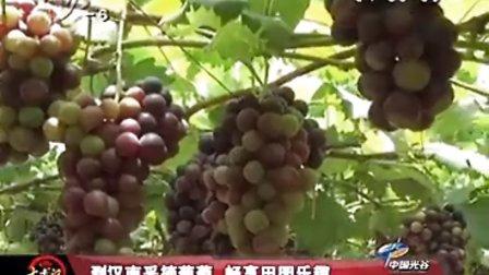 到汉南采摘葡萄 畅想田园乐趣
