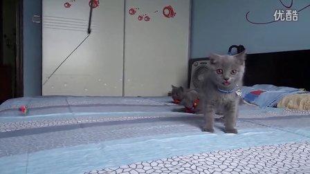 淘气三兄妹-皇太极
