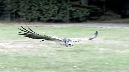 獵奇 第六十一集  猎鹰大乱斗