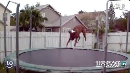 [世界多欢乐]超搞笑动物玩蹦床-笑死人不偿命-动