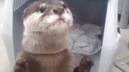 [世界多欢乐]最新搞笑动物超长集合大放送超级搞