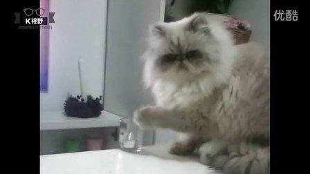 [K分享] 实拍恶霸猫打碎玻璃杯!主人都气笑了!