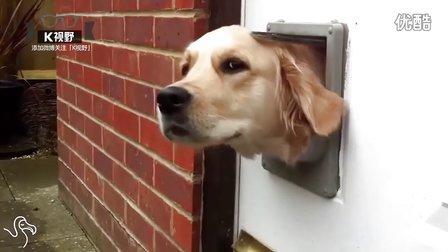 [K分享] 太任性 偏要钻猫洞的狗狗