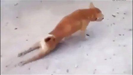 可怜的小狗?