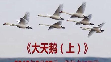 大天鹅(上)