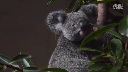 澳大利亚圣灵群岛 - 岛屿度假村游轮一日游Island Escapes