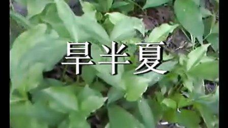 旱半夏种植技术,中药材种植指南网,黄芩南星红花远志射干知母等