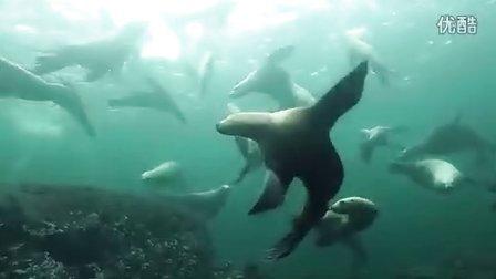 带你去BC省的水下世界绝妙探险