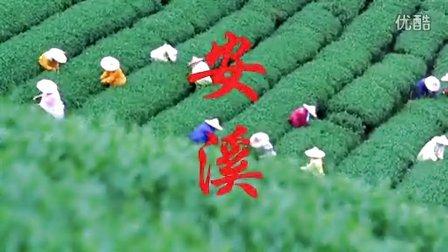 安溪铁观音-2015春茶上市