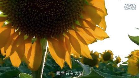 想做向日葵