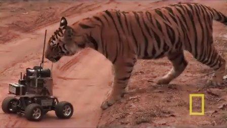 【环球】动物搞笑视频集锦2
