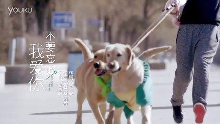 张碧晨_tan8.com