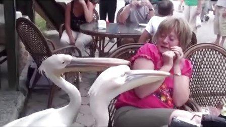 【环球奇趣】动物搞笑视频集锦