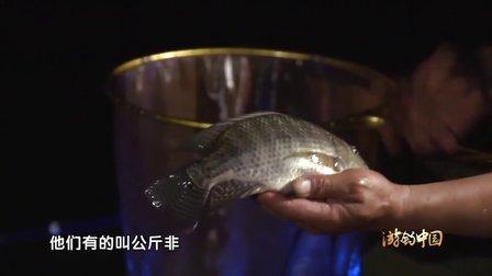 《游钓中国》第29集 夜钓马堵山