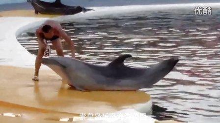 乐岛海洋动物的迷人表演