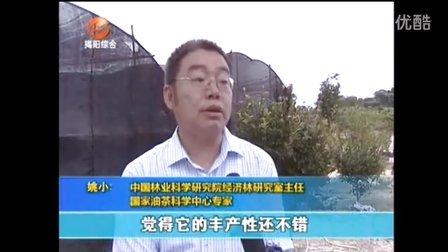 新闻快讯(国家粮油专家到我公司对油茶种植和加工进行指导)
