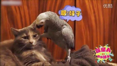 【萌星人de那些破事04】鹦鹉作死!大胆调戏高冷猫妹!