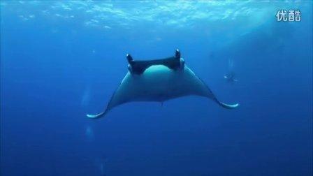 海洋保护讲座--潜水员Andie带你走进神奇的海洋