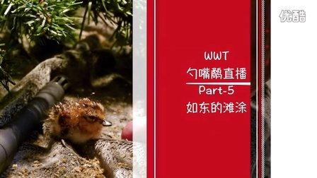勺嘴鹬WWT直播节目-如东的滩涂【中文字幕】Part 5