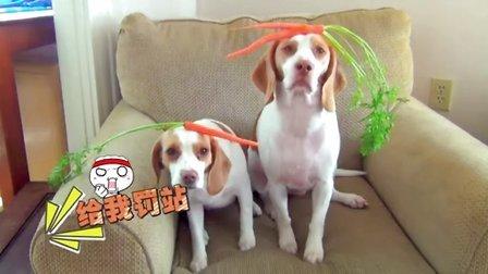 【萌星人de那些破事06】你们头上都长草,汪星人长萝卜!