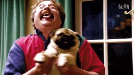 搞笑GIF视频 每日GIF视频 据说宠物和主人一样一样的 可爱萌宠!猪猪图槽40