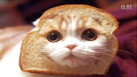 大海解说 面包的搞笑逃生史