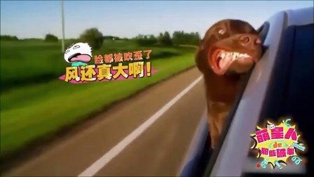搞笑 动物旅游糗事多 08