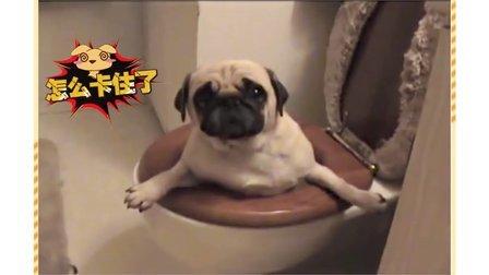 呆萌搞笑宠物视频 这智商真的是硬伤呀
