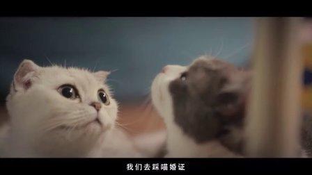 《喵星人抢不到》第二季04集:未领成的喵婚证(暖男版)