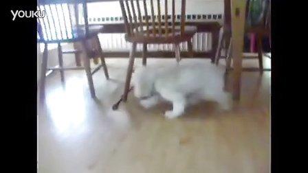 搞笑 可爱小宠物狗们的欢乐生活。