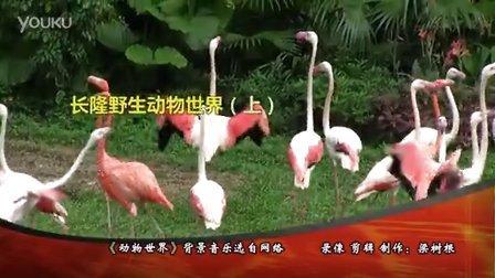广州长隆野生动物世界(上)