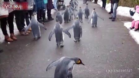【搞笑动物】企鹅搞笑视频合辑2015可爱爆笑企鹅